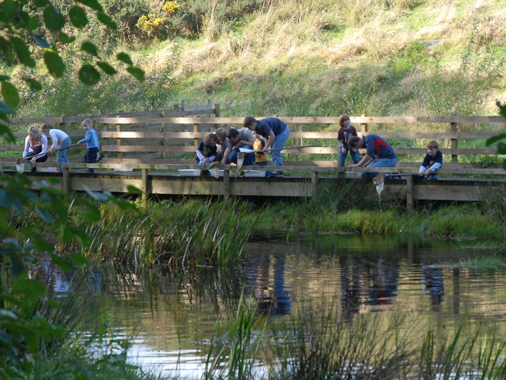 pond dipping at cream o galloway